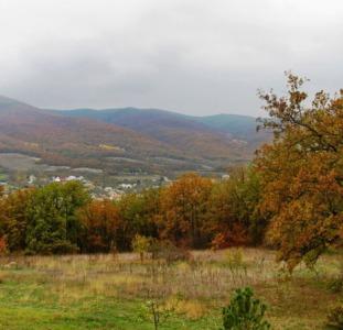 Прекрасный участок возле леса в с. Гончарное