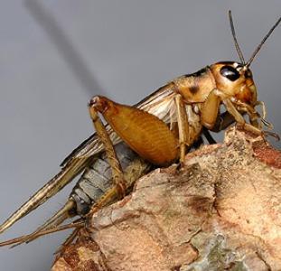Экзотические насекомые,  скорпионы и пауки