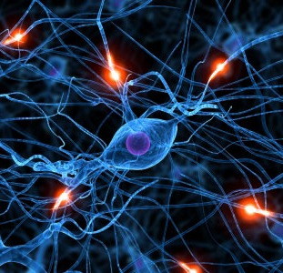 Медицинские услуги Вызов невропатолога на дом