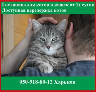 Гостиница для котов и кошек от 1х суток. Доступная передержка котов