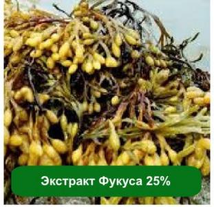 Здоровье, красота Купить экстракт фукуса в Украине