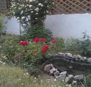 """Отдых на Азовском море. Арабатская стрелка. Уютный дворик """"Азовская роза"""" от 70 грн"""
