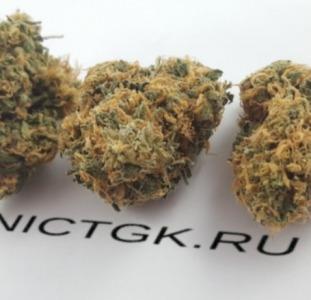 Сайт ORGANICTGK.RU | Купить марихуану бошки СПб
