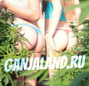 Сайт GANJALAND.RU | Купить марихуану бошки гашиш Москва