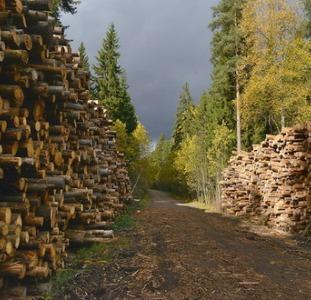 Требуются работники на вырубку леса