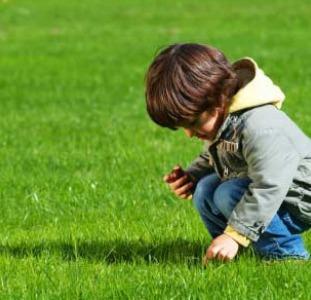 Семена газонной травы DLF Trifolium. ОПТОВАЯ ЦЕНА.