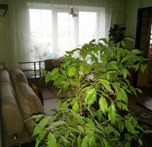 Продам 3х квартиру с ремонтом на ул. Якуба Колоса. ст.м. Святошин