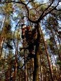 Спиливание деревье,    полный комплекс