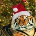 """DataLife Engine Версия для печати Рамка для фото  """"Тигр-мороз """""""
