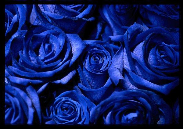 Ну, думаю, что за чушь- синие розы в капельках росы.  Вот ведь чушь, не...