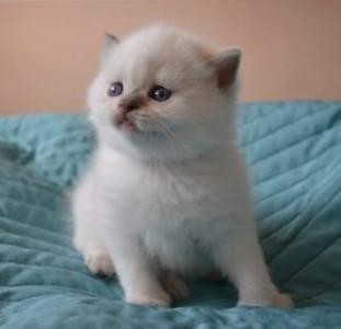 Котята ищут любящих хозяев