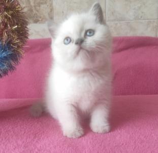 Котята отличного качества по доступным ценам