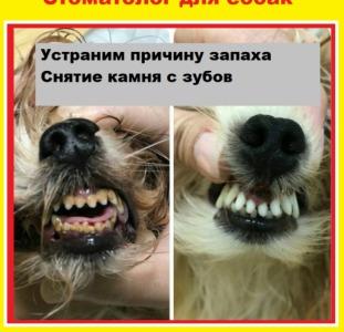 Снятие зубного камня у собак ультразвуком на дому