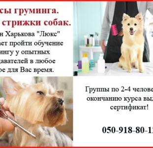 """Школа груминга """"""""Люкс"""""""" в Харькове для всех желающих"""