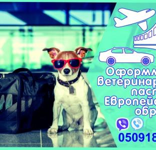 Прочие Ветеринарная справка форма 1 Справка на титры, ветеринарный паспорт