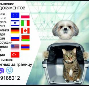 Прочие Тест на бешенство Справка собаки выезд за границу Официально ветпаспорт