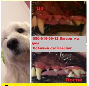 Удаление зубного камня у собак ультразвукомна дому