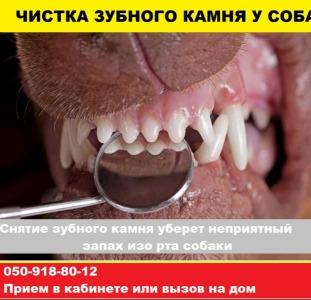 Чистка зубного камня у собак без наркоза мелким породам