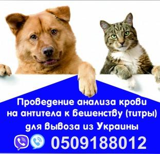 Прочие Анализ на бешенство Евросправка для собак титры на антитела Официально