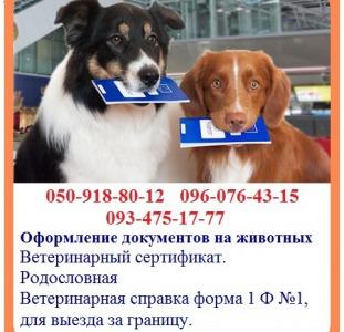 Оформление документов на животных - быстрое оформление. Ветеринарная справка форма 1 Ф №1, для выезд