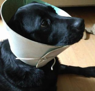 Защитный воротник(ветеринарный конус)для собак