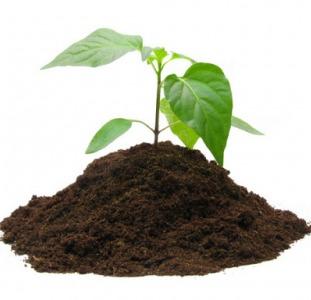 Торфяные субстратыдля растений. Низкие цены,различныефасовки
