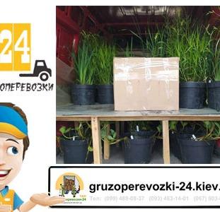 Перевозка растений Киев