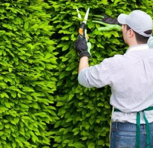 Садовник, обрезка сада, садовых деревьев, уход за садом Одеса