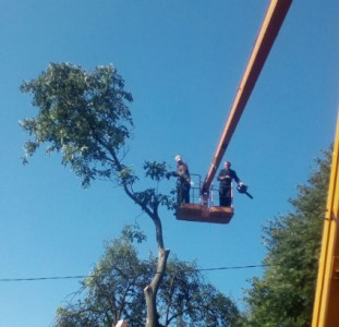Спил дерева,демонтаж работы,земляные работы в ручную Одеса