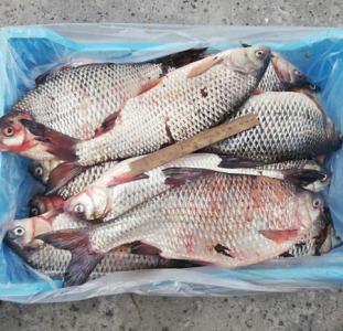 Продаж свіжовиловленої риби оптом