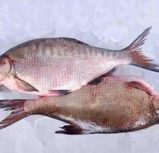 Рыба свежая речная опт.