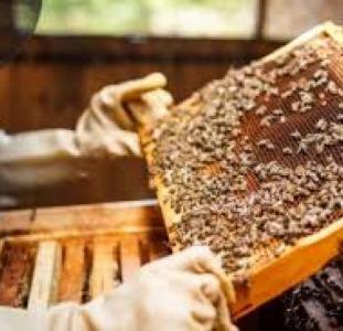 """Продам бджолосім""""ї"""