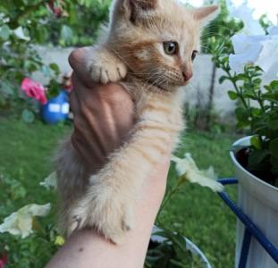 Рыжие котята хлопчики и девчата
