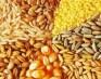 Продажа зерновых (пшеница, кукуруза, ячмень).