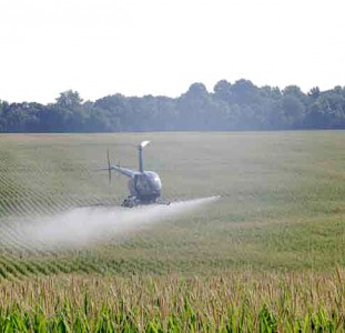 Гусеница лугового мотылька - услуги по авиаобработке кукурузы